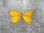"""Butterfly (yellow)"", (2012) pencil & crayon, 23 x 27cm (9 x 10.6in)"