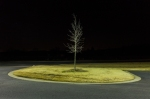 """HP Tree - 72034"" (2011), C-type photograph, 76.2 x 114.3 (30 x 45 in), Edn of 5"
